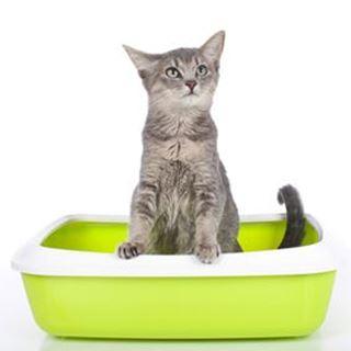 Afbeelding voor categorie kattenbakken